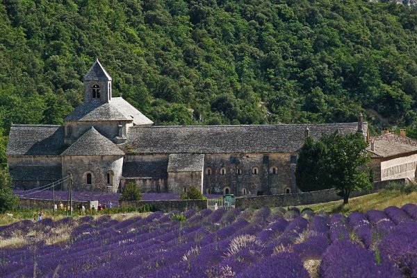 The Abbaye de Senanque, with lavender fields