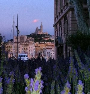 Lavender Field on the Old Port of Marseille 2013