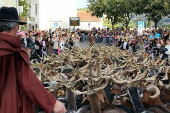 The Golden Goat Festival