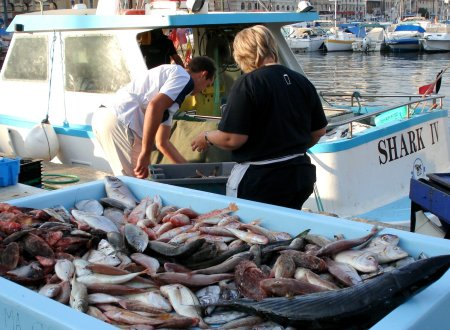 The fish market on Marseille's quai des Belges