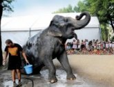 Alexis Gross Elephant shower small