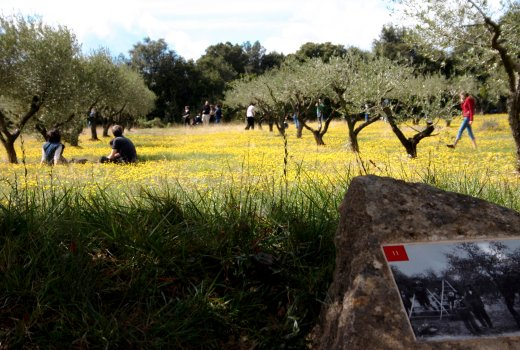 Memories of the Garrigue Mediterranean garden at the Pont du Gard