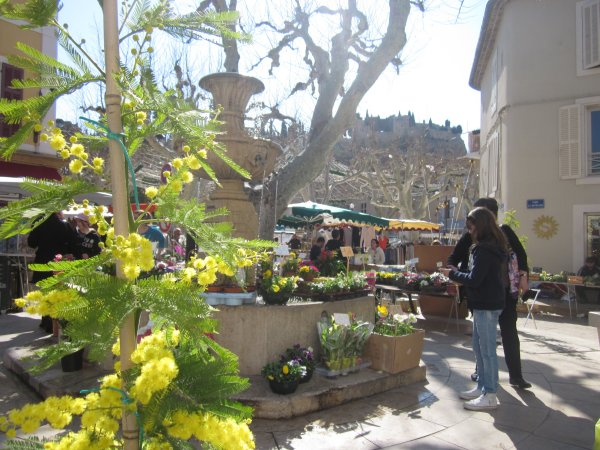 The market in Cassis